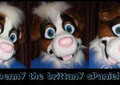 Benny the Brittany Spaniel