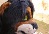 tlk-style-lion