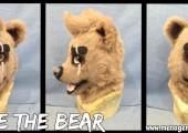 Blake the Bear